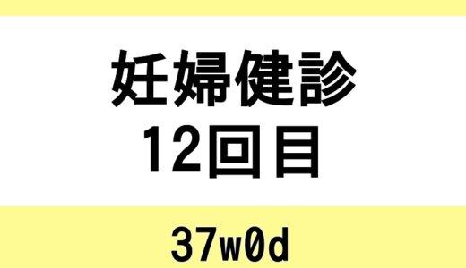 【妊婦健診12回目 / 37w0d】まさかの貧血。正期産。